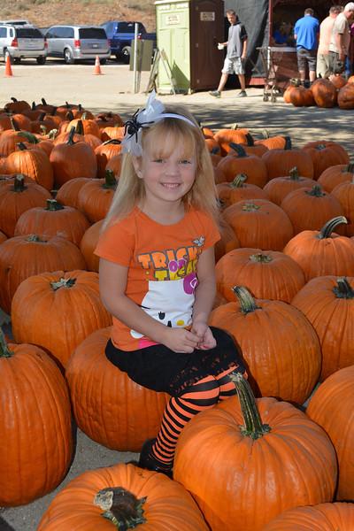 Lombardi Ranch Pumpkins